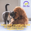 The Cheapest Dog and Cat in-home Grooming Near you in Dubai